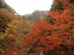 中津峡紅葉