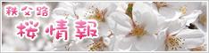 秩父路桜情報